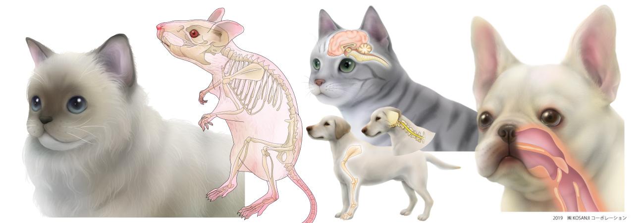 動物イラストレーターのリアルタッチの制作依頼